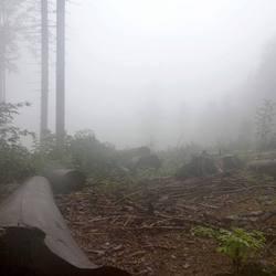 Mist in de bergen van Tsjechië.