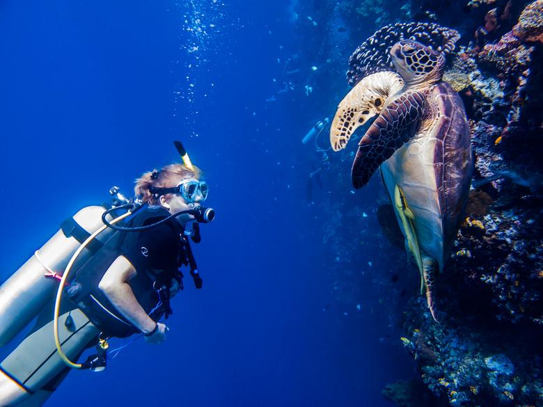 Encounter - Een bijzonder moment tussen mens en zeeschildpad.