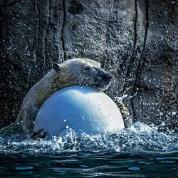 Zwemles ...