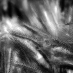 Waving grain