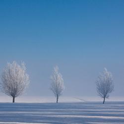 Bomen onder de rijp