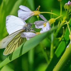 Vlindertje na de regen