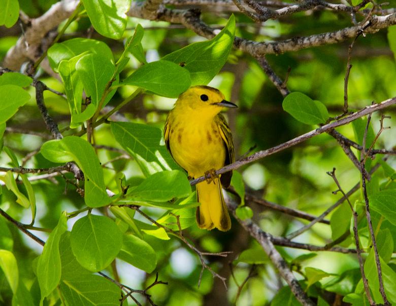 FZN - Wie weet de naam van dit prachtige vogeltje?