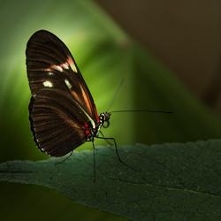 Vlindertuin De Kas