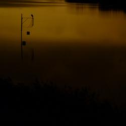 Reiger in maanlicht.