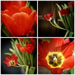 Vaas tulpen met dissident