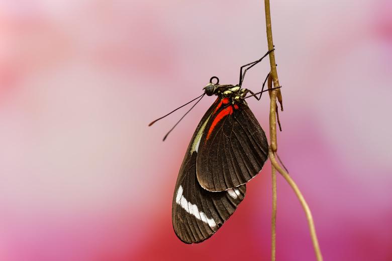 Vlinder in focus - Vlinder in focus