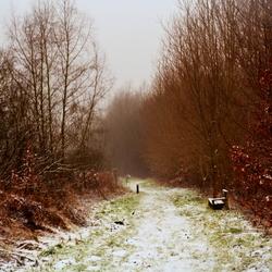 Rien Poortvliet setting vorige week hier in het bos..