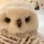 IMG_5946 Sneeuwuil