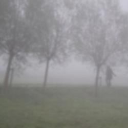Eenzaam in de mist.jpg
