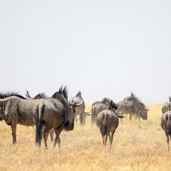 Namibië 128