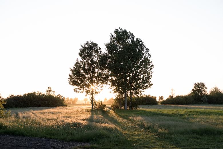 Zeeland - Zonsondergang - Prachtige zonnetje door de bomen in het Zeeuwse landschap.