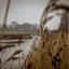 Koopmans polder Andijk