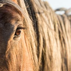 Detail van een paard