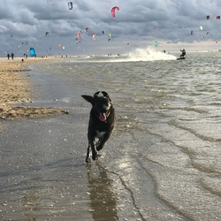 Dog and kite surfers fun