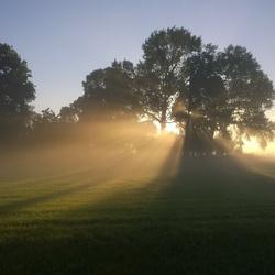 ochtendzon schijnt door de bomen