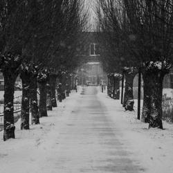 laan van bomen met sneeuw