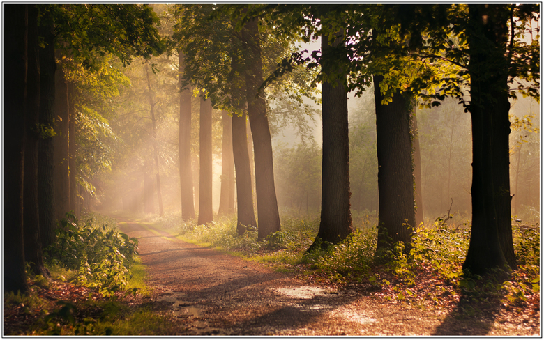 Forest after the Rain - Een heerlijk fris bos vlak na een hevige onweersbui. Deze foto gemaakt in Ommen Landgoed het Laar.<br /> <br /> Bedankt voor