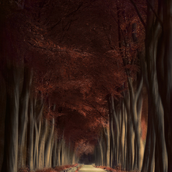 The autumn dream