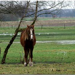 paard & berk