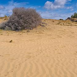 Dunas de Maspalomas 2 - Gran Canaria