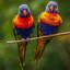 papegaaien: lori's