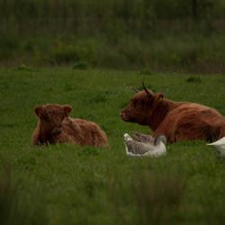 Samen in het gras