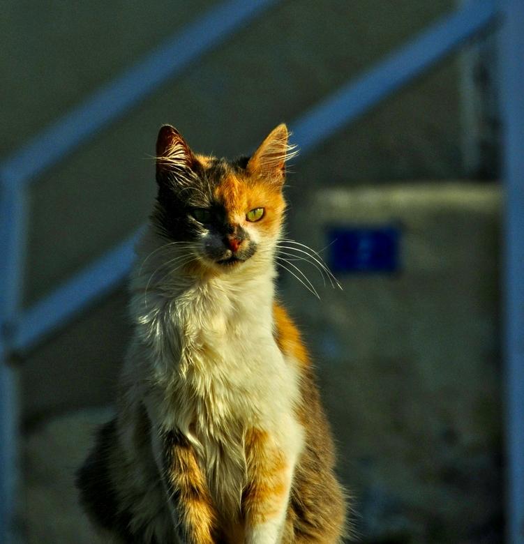 Cyprus-89. - Aan katten geen gebrek op Cyprus.<br /> Deze zat op de trap van de stadsmuur<br /> van Famagusta.