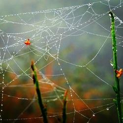 Messy web!