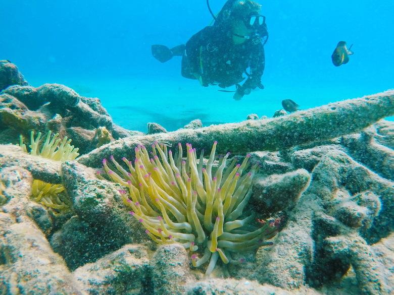 Exploring the ocean - Duiken in het Caribisch gebied is schitterend. Zoveel leven, overal is iets te zien.
