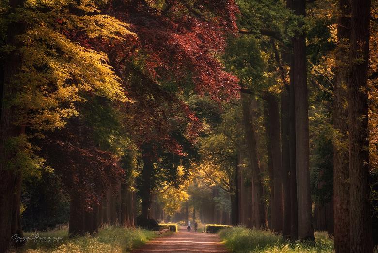 Overwhelmed. - Het is oktober! Laat de herfstkleuren maar losbarsten!