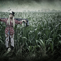 The Scarecrow...