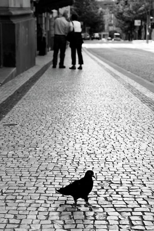 Bird of Porto..