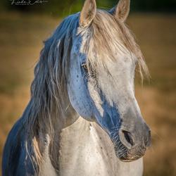 HORSES (1 van 1)-13