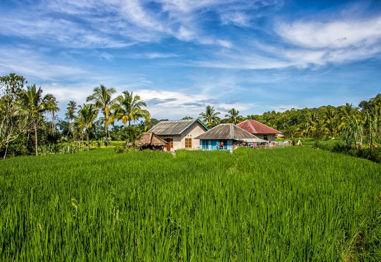 Living in the Green, Tetebatu (Indonesia) - Tijdens ons verblijf in Tetebatu op Lombok hebben we een wandeling gemaakt door de rijstvelden in de buurt
