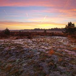 lichtere voorgrond drunense duinen bevroren mos2