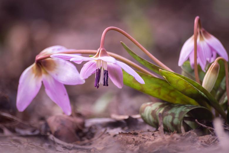 Ontwaken - Het ontwaken van de lente... heb je het ook gevoeld?<br /> 1/50sec. f5.6 ISO100, 300 mm<br /> <br /> (c)2017-vandaag Martijnvandernat.nl