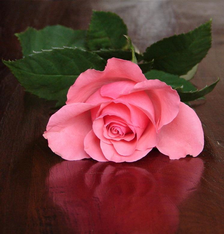 PINK RIBBON IV - roze roosje.