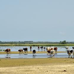 Het Lauwersmeer.