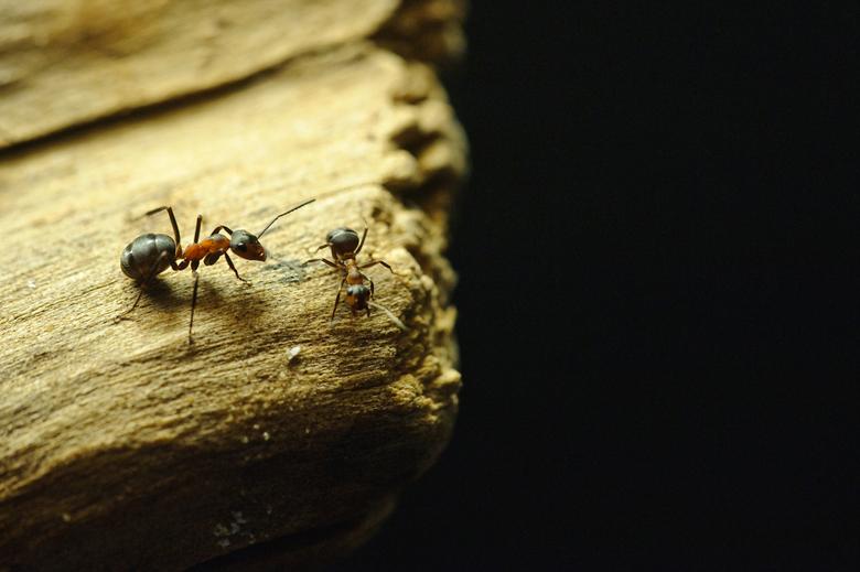 Doe voorzichtig - Had liever iets meer scherptediepte gehad: het kopje van de mier die over de rand kijkt is niet scherp. Maar de beestjes zaten geen