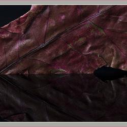 Gedroogd rood blad