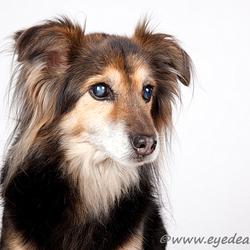 Daisy II - het 15-jarige hondje....