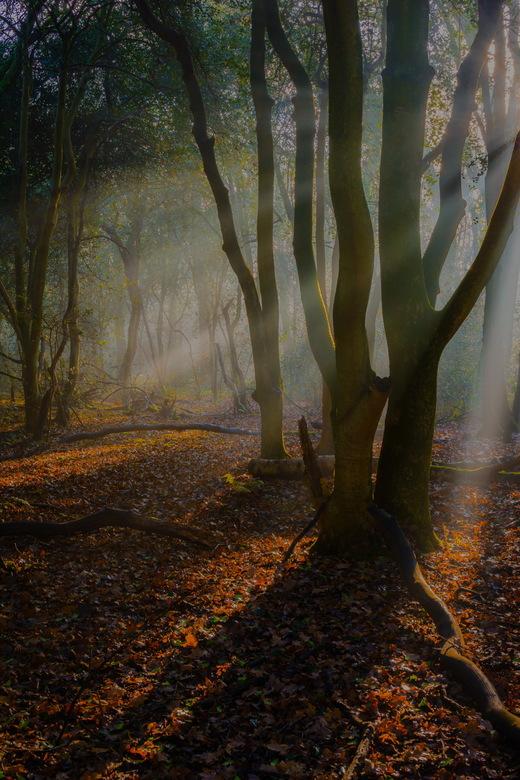 Prachtig licht in het mantingerbos
