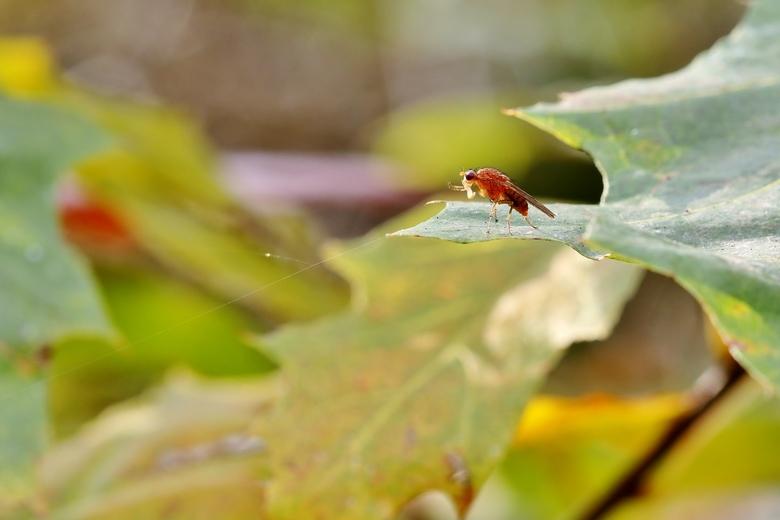 Herfstbladen - Deze vlieg geniet nog even van de laatste herfstzon.
