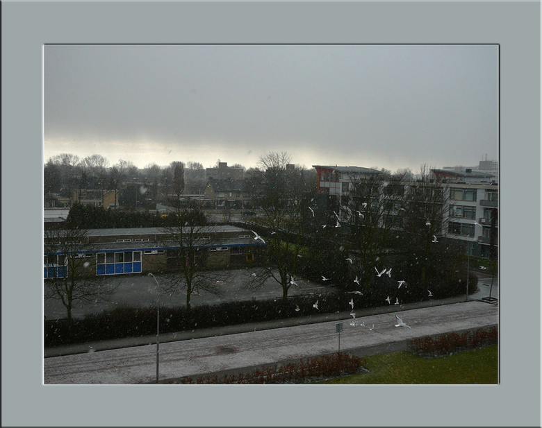 Sneeuw en Meeuwen - Zondag morgen heeft het even flink gesneeuwd, deze foto is vanaf ons belkon gemaakt.<br /> De meeuwen hebben weer eens ruzie om h