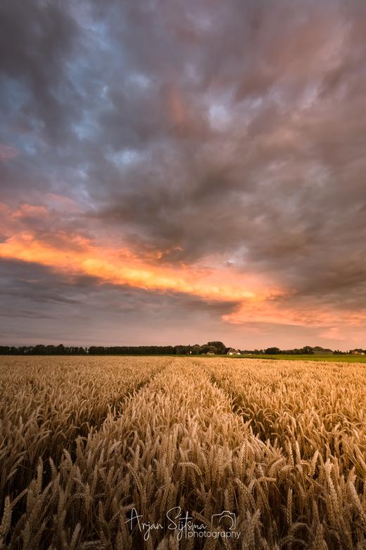 Graanveld in het laatste avondlicht -