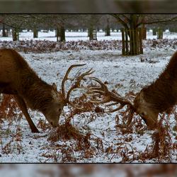Vechters in de sneeuw