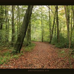 Herfst in het bos II