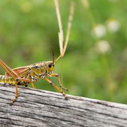 Bug Everglades