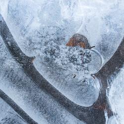 Frozen details